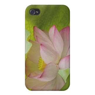 Lotus flower, Nelumbo nucifera, China Case For iPhone 4