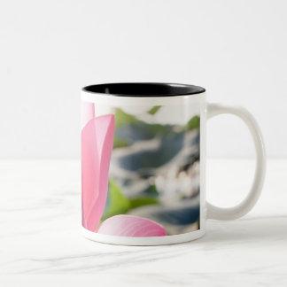 Lotus flower [Nelumbo speciosum] in full Two-Tone Coffee Mug