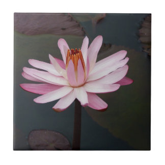 Lotus Flower of Love Tiles