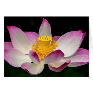 Lotus Flower Photography Great Yoga Om Gift! Card