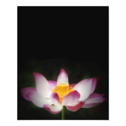 Lotus Flower Photography Great Yoga Om Gift! Flyer