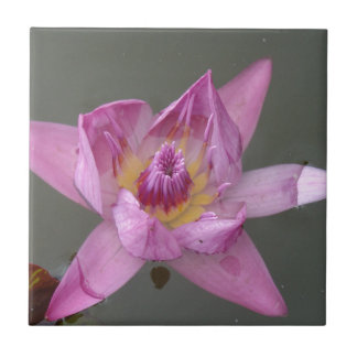 Lotus Flower Tiles