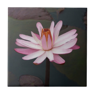 Lotus Flower Ceramic Tiles