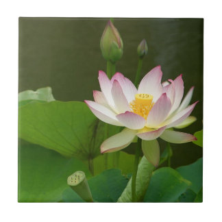 Lotus Flower Tile. Small Square Tile