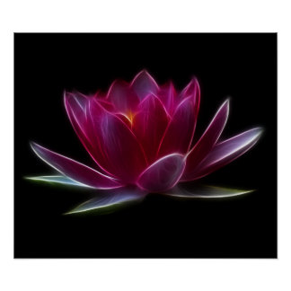 Lotus Flower Water Plant Poster