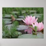 Lotus Flower/Waterlily