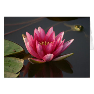 Lotus flower with frog greeting card
