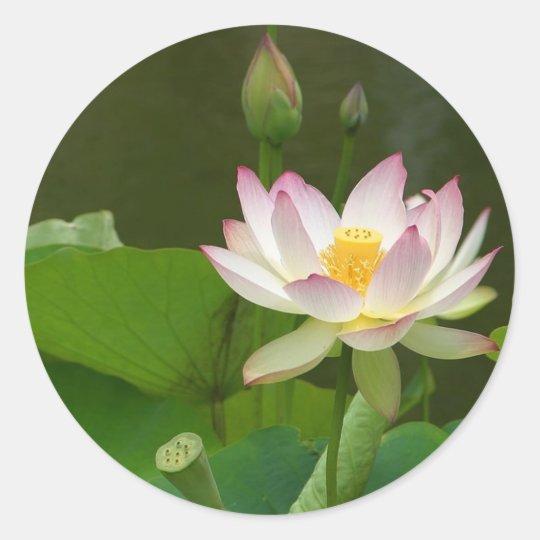 Lotus Flowers Ponds Classic Round Sticker