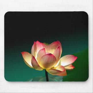 Lotus in full bloom, mousepad