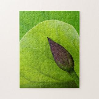 Lotus Leaf and Bud | North Carolina Jigsaw Puzzle
