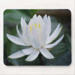 Lotus or waterlily and meaning mousepads