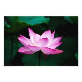 lotus photo print