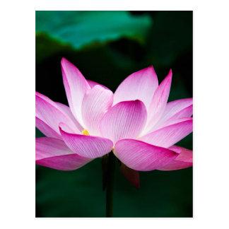 lotus postcard
