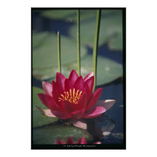 lotus poster