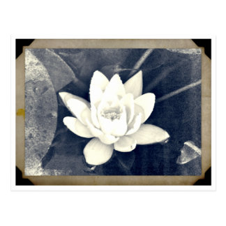LOTUS VINTAGE PHOTOGRAPH POSTCARD