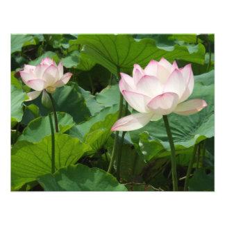 Lotuses Invite