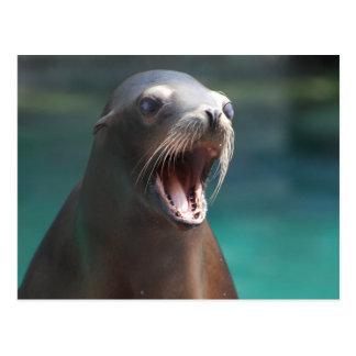 Loud Sea Lion Postcard