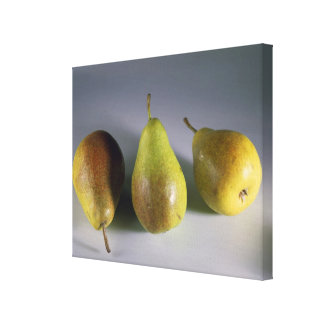 Louise Bonne pears For use in USA only.) Canvas Print