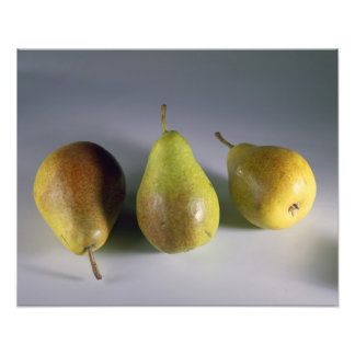Louise Bonne pears For use in USA only.) Photo Print