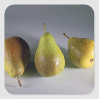 Louise Bonne pears For use in USA only.) Square Sticker