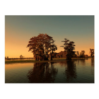 Louisiana bayou and cypress trees at sunset light postcard