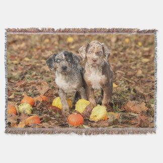 Louisiana Catahoula Puppies With Pumpkins