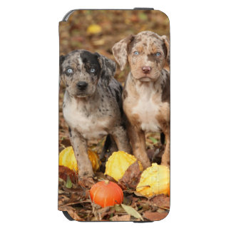 Louisiana Catahoula Puppies With Pumpkins Incipio Watson™ iPhone 6 Wallet Case