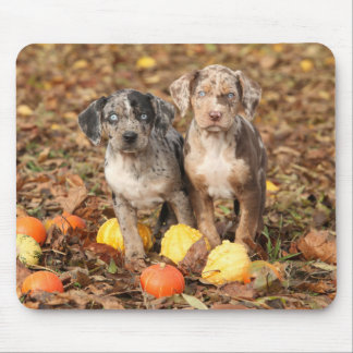 Louisiana Catahoula Puppies With Pumpkins Mouse Pad