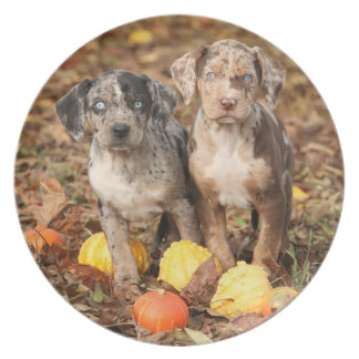 Louisiana Catahoula Puppies With Pumpkins Plates