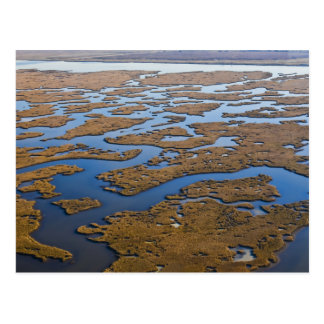 louisiana Coastal Wetlands Postcard