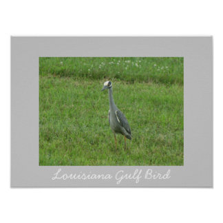 Louisiana Gulf Bird Poster Poster