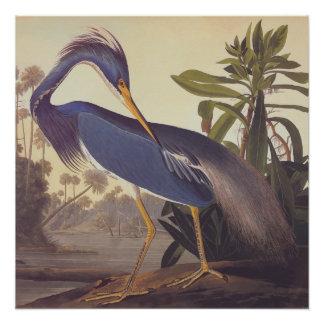 Louisiana Heron Audubon Vintage Art Bookplate Poster