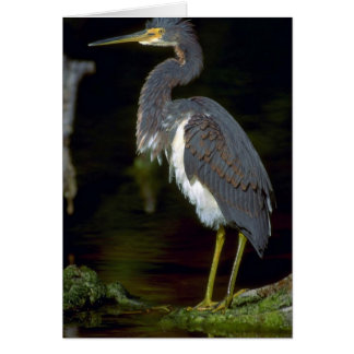 Louisiana heron card