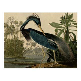 Louisiana Heron Postcards