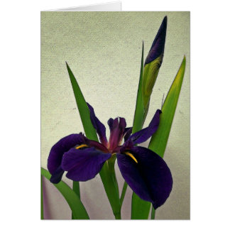 Louisiana Iris Note Card