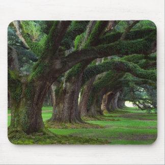 LOUISIANA LIVE OAK TREES MOUSE MAT