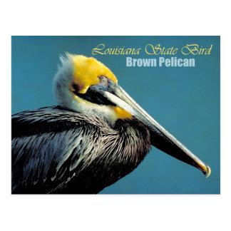 Louisiana State Bird - Brown Pelican Post Card