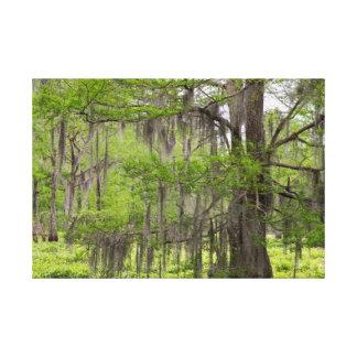 Louisiana Swamp Cypress Canvas Print
