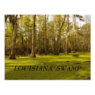 Louisiana Swamp (LA), LOUISIANA  SWAMP Postcard