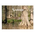 Louisiana Swamp Postcard