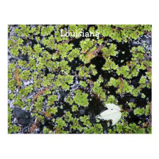 Louisiana Swamp Water Postcard
