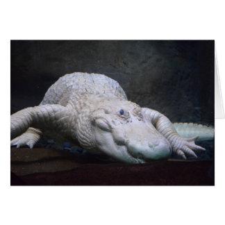 Louisiana White Alligator Card