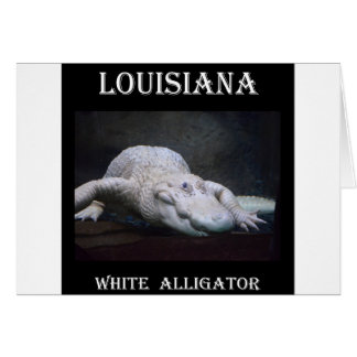 Louisiana White Alligator New Card
