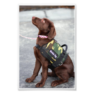 "Loula ""The Service Pup"" Photograph"