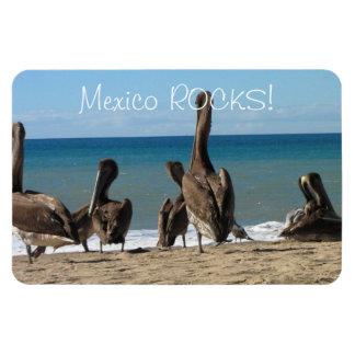 Lounging Beach Pelicans; Mexico Souvenir Rectangular Photo Magnet