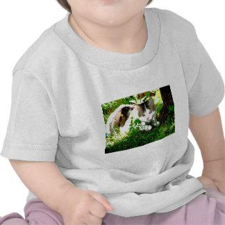 Lounging kitty t shirts