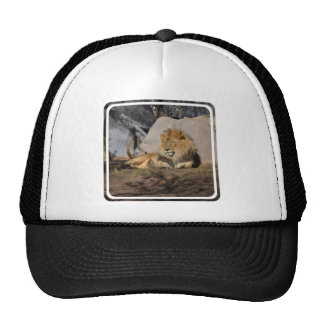 Lounging Lion Cap
