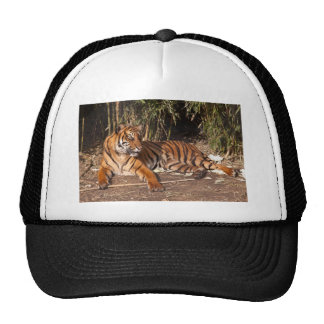 Lounging Tiger Hat
