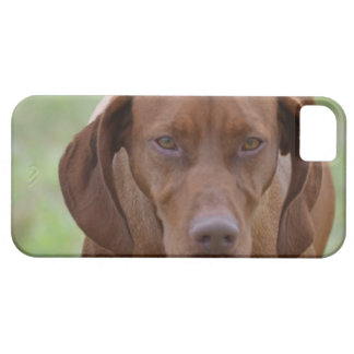 Lovable Vizsla Barely There iPhone 5 Case