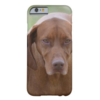Lovable Vizsla Barely There iPhone 6 Case